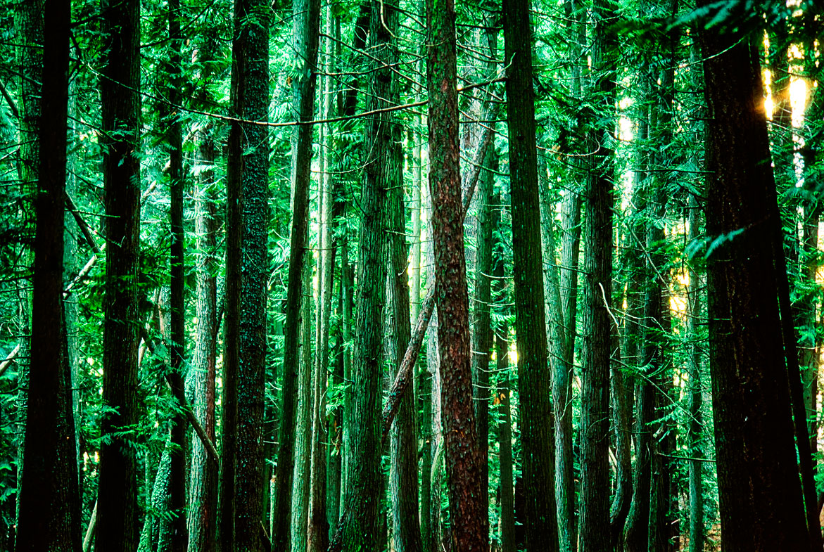 The Emerald Forest | © Jonathan McIntyre Photography
