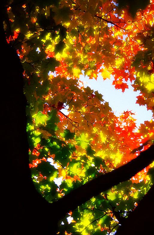 Leaf Magic | © Jonathan McIntyre Photography