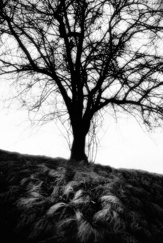 On the Hill | © Jonathan McIntyre Photogeraphy