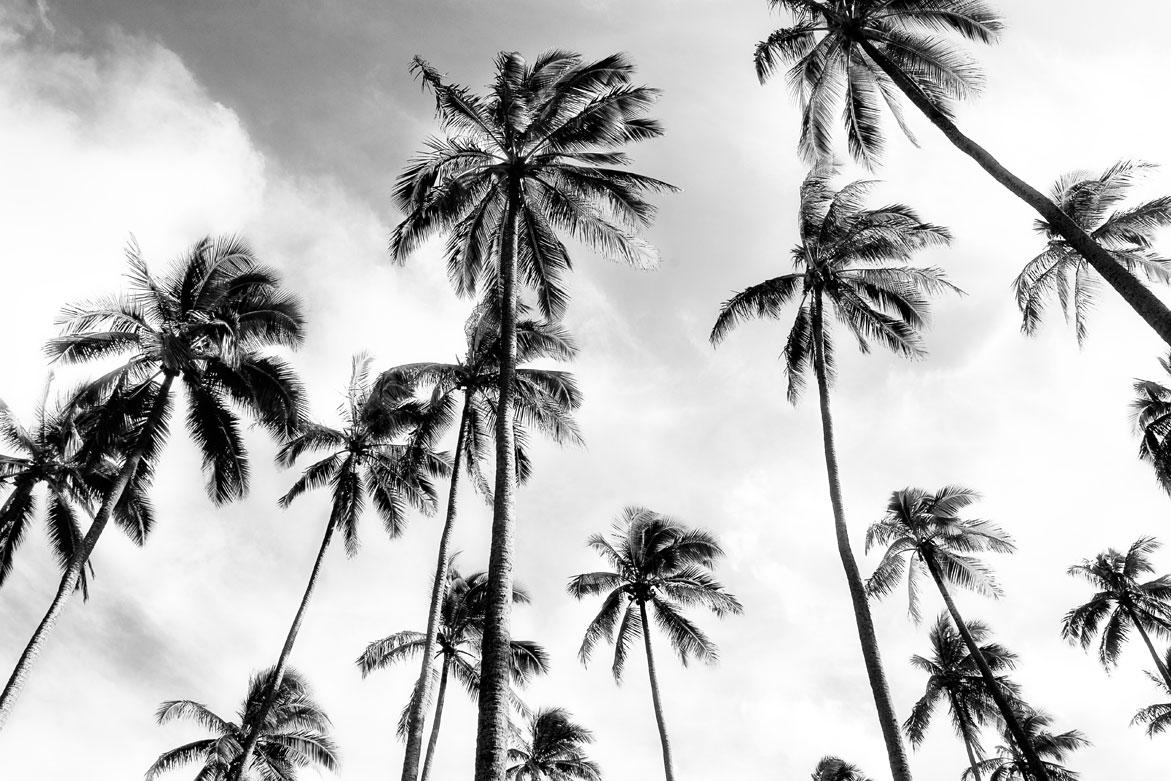 Palm Grove | © Jonathan McIntyre Photogeraphy
