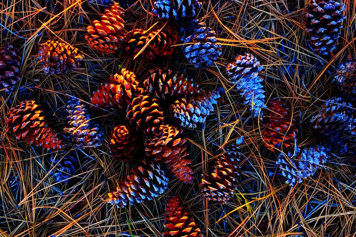 Pine Cones | © Jonathan McIntyre Photography