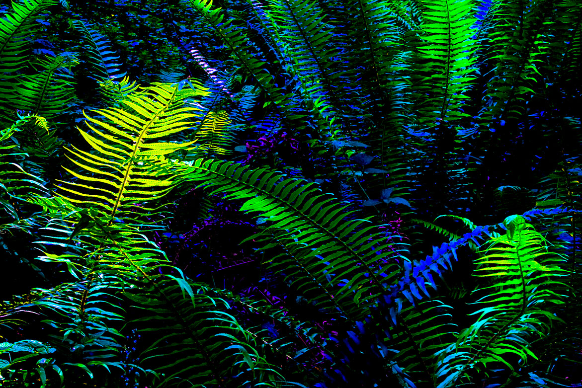 Magic in the Underbrush | © Jonathan McIntyre Photography