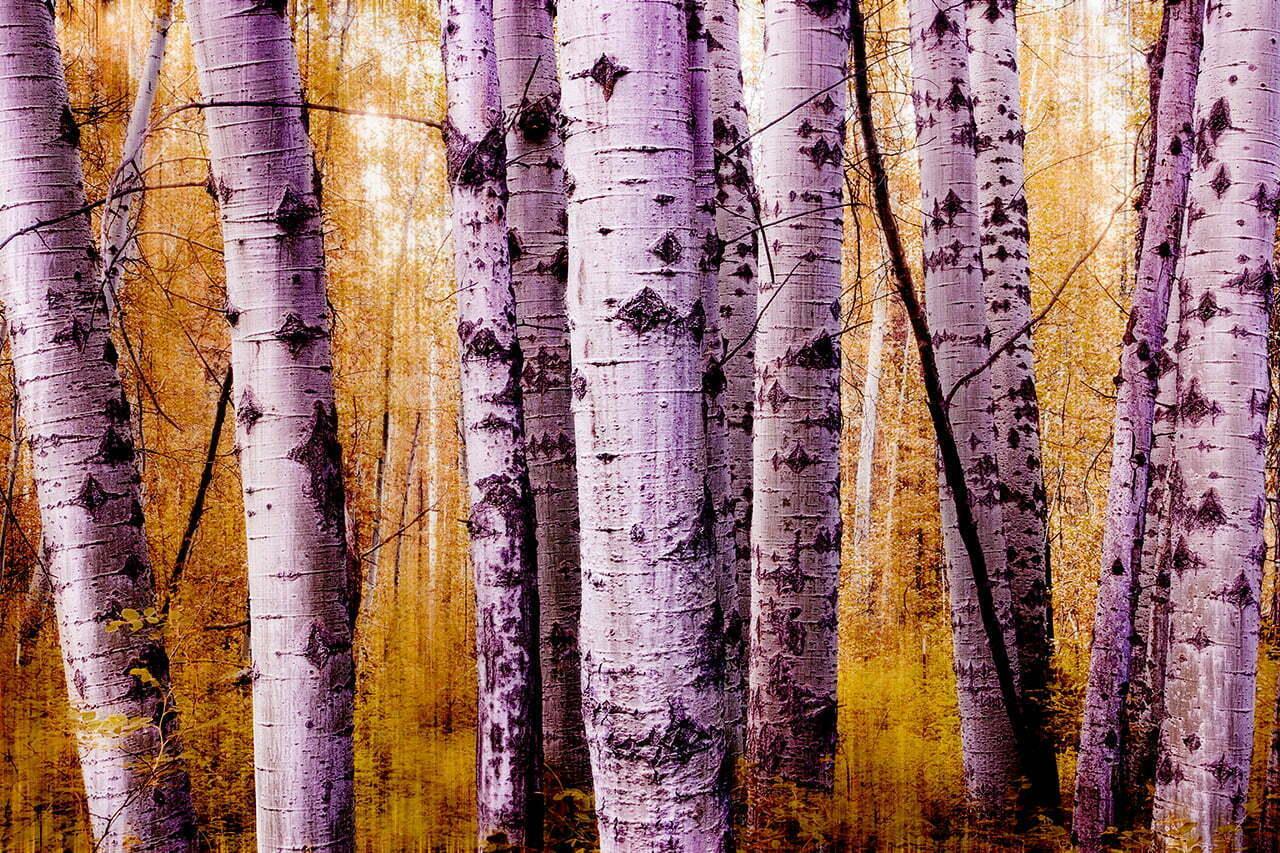 Impressions NO 5 | Fine Art Landscape | © Jonathan McIntyre Photography