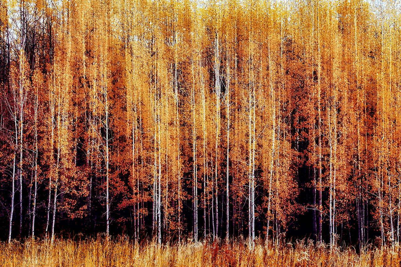 Impressions NO 7 | Fine Art Landscape | © Jonathan McIntyre Photography