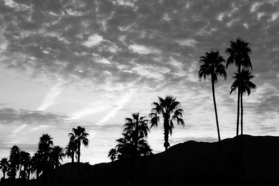 Desert Morning | © Jonathan McIntyre Photography