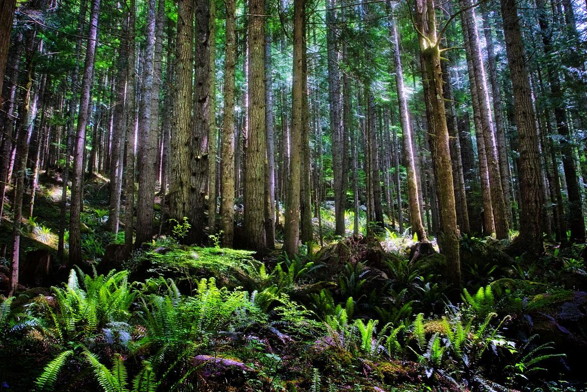 Fangorn Forest | © Jonathan McIntyre Photography