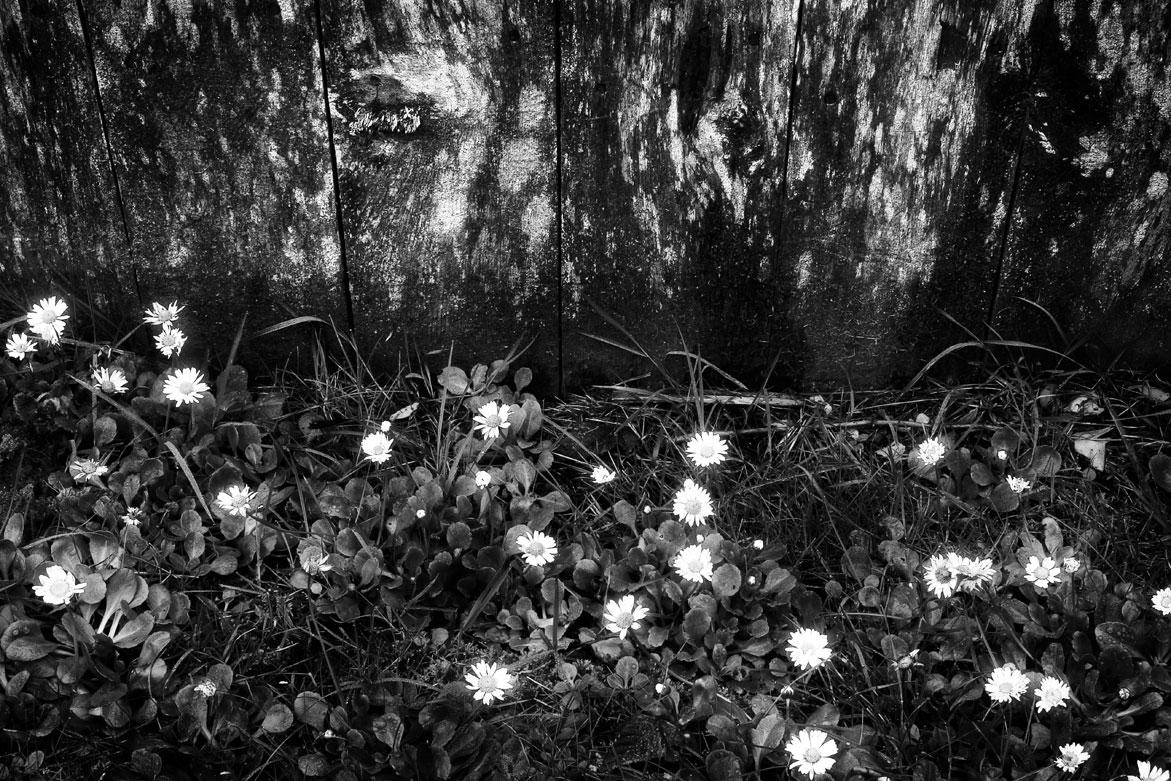 Flower & Wood | © Jonathan McIntyre Photogeraphy