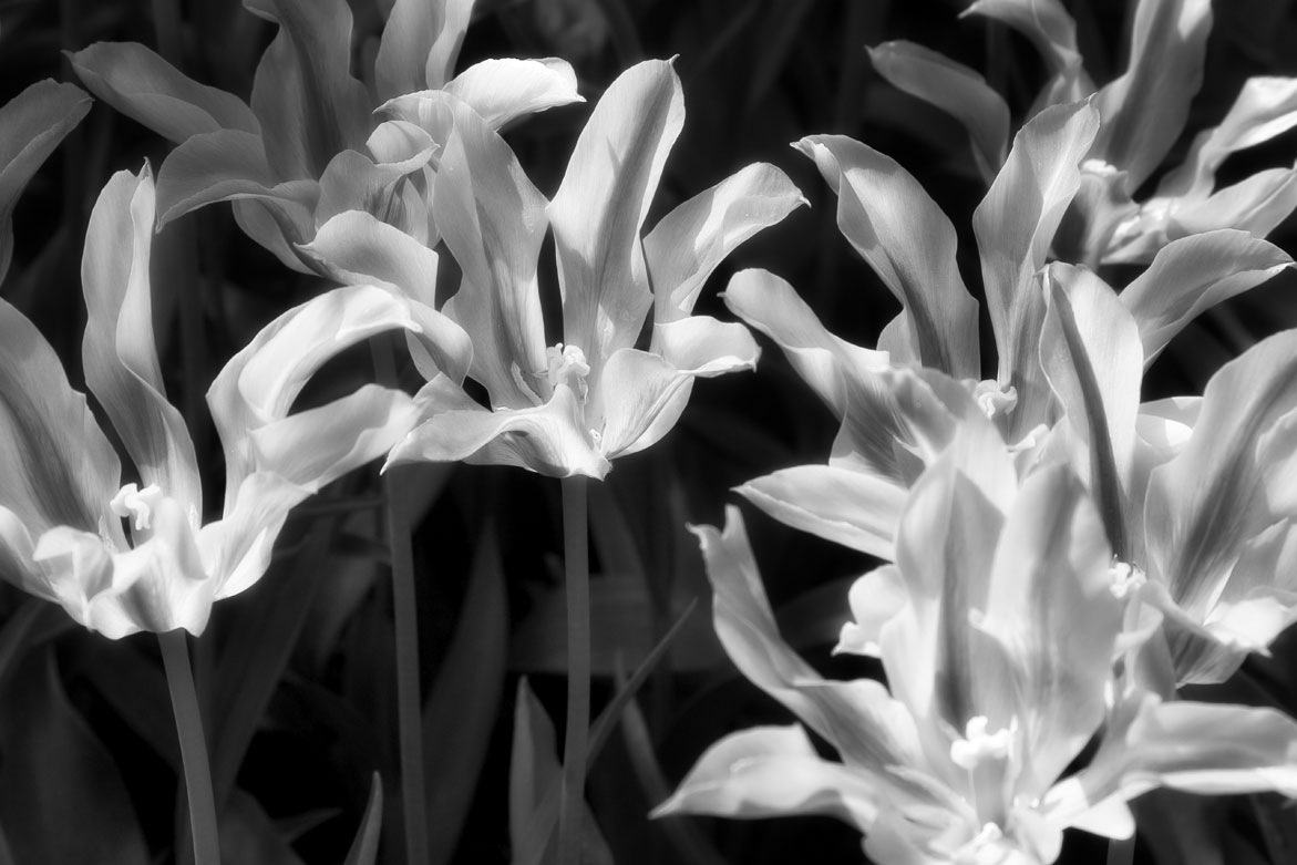 Flower 4 | © Jonathan McIntyre Photogeraphy
