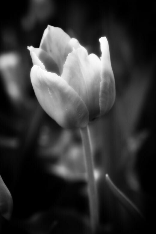 Flower 6 | © Jonathan McIntyre Photogeraphy
