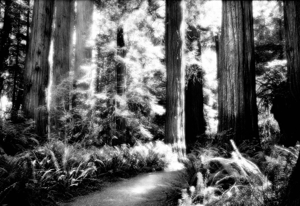 Forest Path | © Jonathan McIntyre Photogeraphy