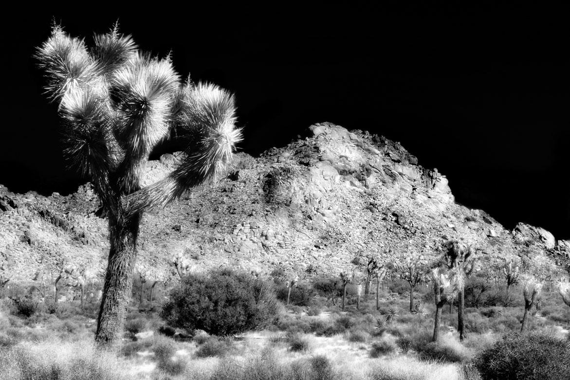 Joshua Tree | © Jonathan McIntyre Photogeraphy