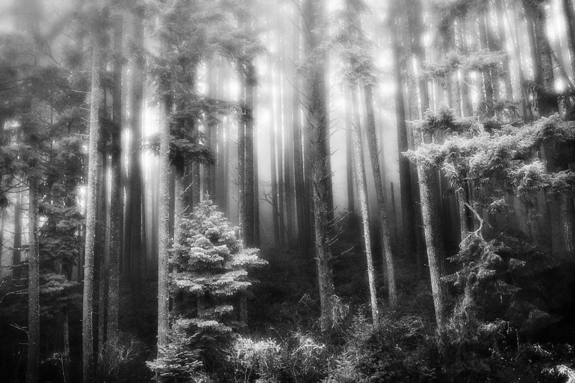Light in the Woods | © Jonathan McIntyre Photogeraphy