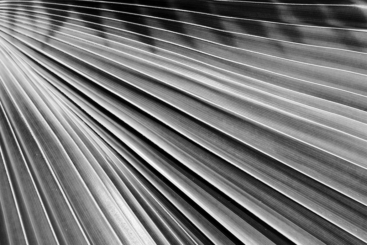 Palm | © Jonathan McIntyre Photogeraphy