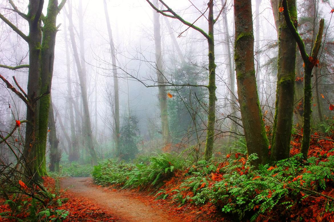 Path of Magic | © Jonathan McIntyre Photography