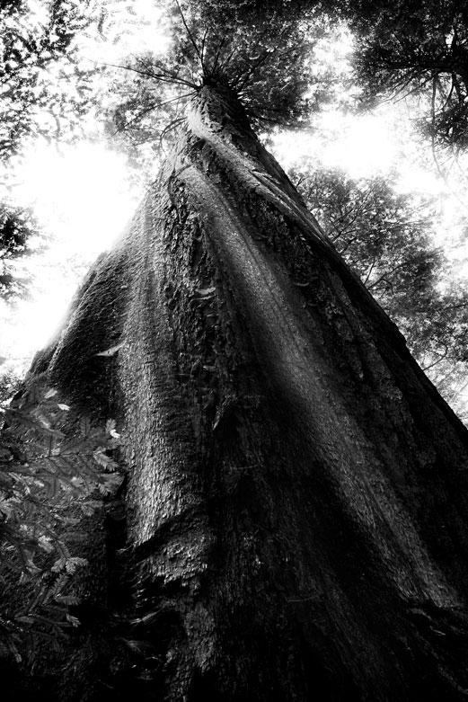 Twisted | © Jonathan McIntyre Photogeraphy