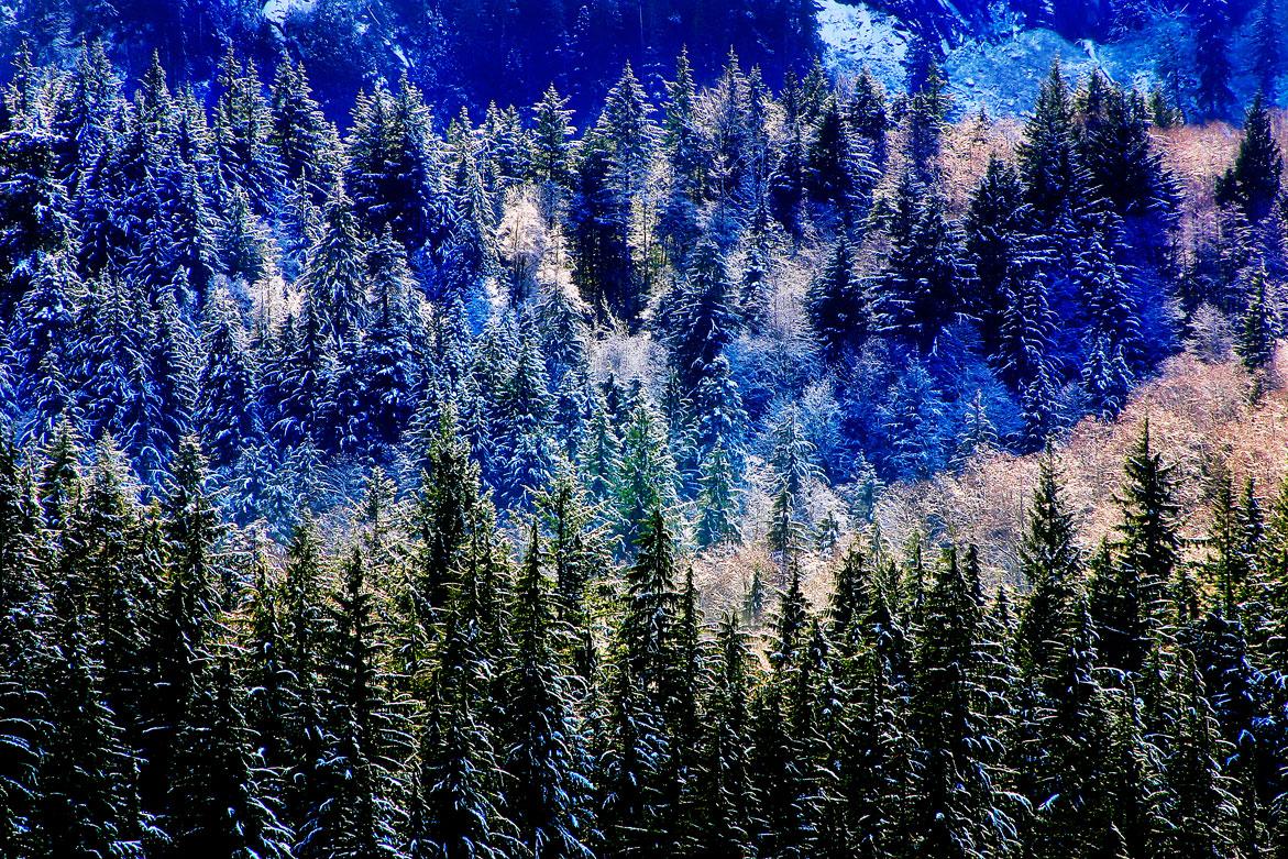 Winter Magic | © Jonathan McIntyre Photography