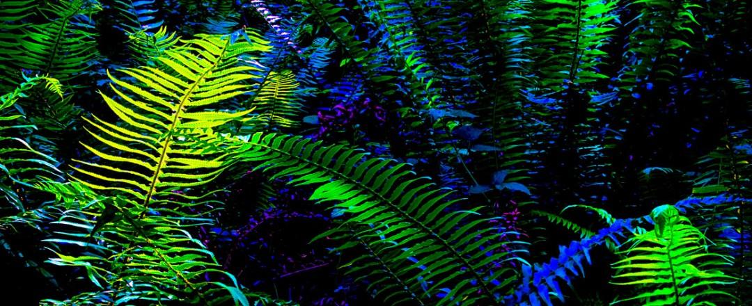 Landscape   Jonathan McIntyre Photography