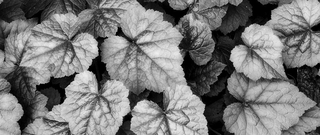 Black & White Photography, Landscape Photography,